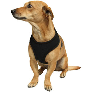 Dog Harness - $9 with FREE Shipping!